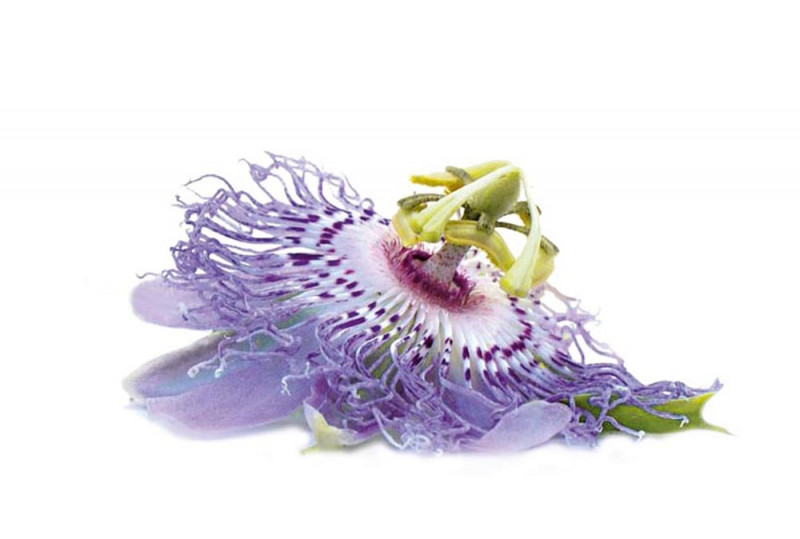 Learn About Passion Flower It S Uses In Traditional Herbal Medicine